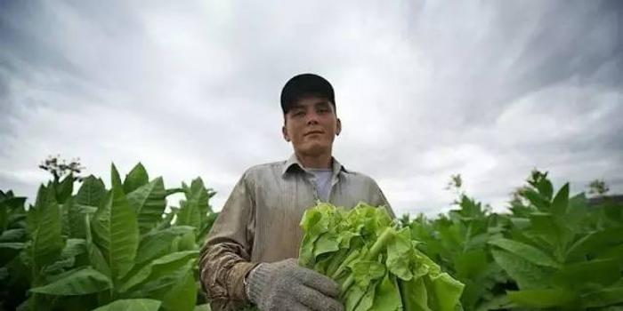 探索哈萨克斯坦的烟草种植农 手机新浪网