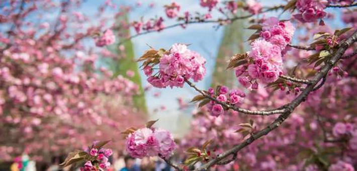 春日合肥 一路繁花似锦