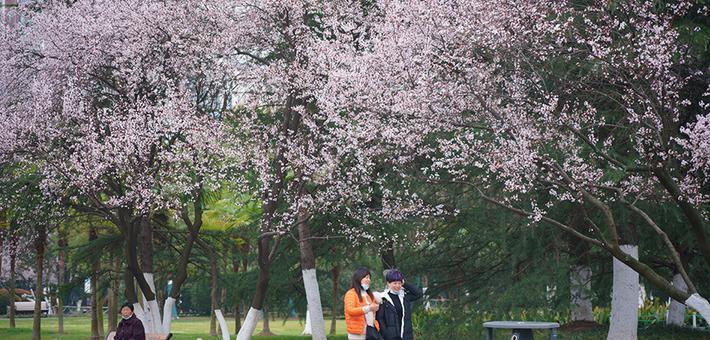 合肥迎惊蛰节气 杏花公园春和景明