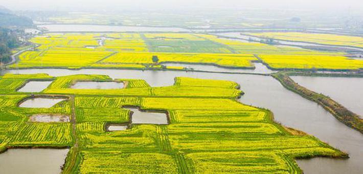 安徽芜湖:响水涧万亩油菜花海