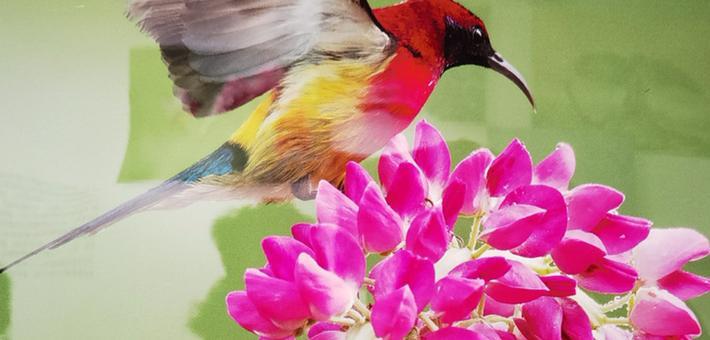 翼翼生辉 看看这些鸟儿有多美
