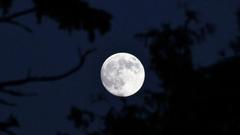 天蝎座满月