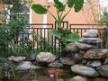 庭院植物需注意的风水事项(图)