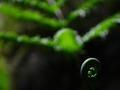 七种绿植化解居家晦气有妙招(图)