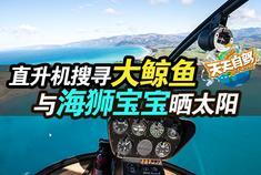 自驾|直升机寻找大鲸鱼 与海狮宝宝晒太阳