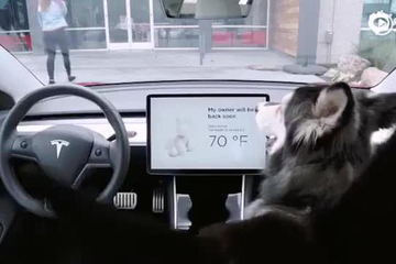 """让狗狗单独留车内也不担心!特斯拉""""Dog Mode"""" 新功能"""