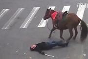 骑马闯红灯撞车 结果人仰马翻