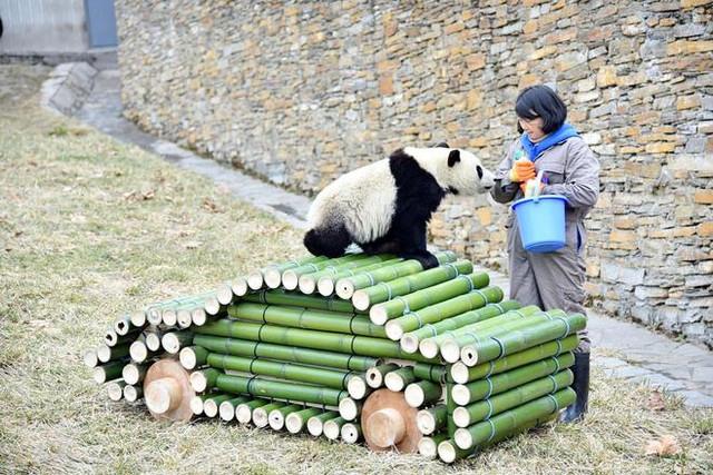 """在全心摆设的熊猫宝来之家,一汽-民众认养的""""熊猫宝来""""正式与大家见面"""