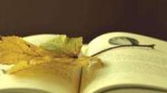 传统文学与网络文学并肩 共创中国文学新高峰
