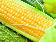 大豆种植面积增加 玉米总产量下降