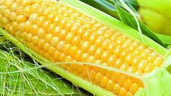 第五天:大豆种植面积增加 玉米总产量下降