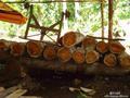 2017年上半年我国进口红木约50万立方米