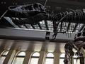 新种恐龙化石将拍卖 买家将获得命名权