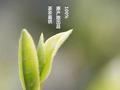 西泠网拍3月18日首推杭州西湖明前龙井茶专场