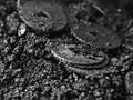 本溪发掘出土半缸宋代古钱币