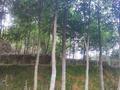 文昌男子非法出售国家重点保护树种沉香树被刑拘