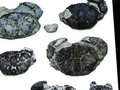 螃蟹化石 沉吟千古的奇石