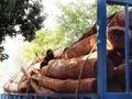 原创血檀:紫檀江湖里最深的套路