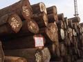 7月这些大事件 将影响国内木材进口市场