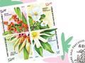 """香港将发行以""""珍稀植物""""为主题的特别邮票"""