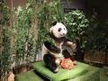 博物馆回应大熊猫塑化标本争议:用于科普教育