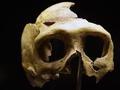新研究揭示尼安德特人的灭绝竟然是因为不会画画