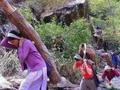 从印度到中国 小叶紫檀的艰辛跨国大迁徙