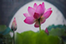 在华岩遇见花与禅