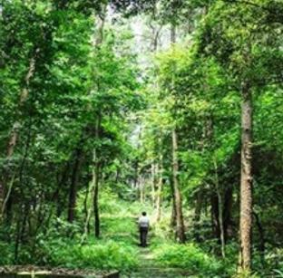 游走在铁山坪森林深处
