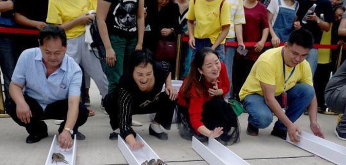 """重庆民众举行大闸蟹""""赛跑""""比赛"""