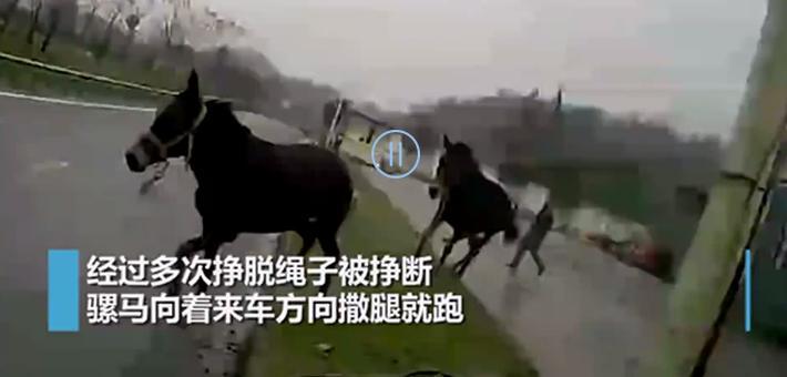 骡马闯高速从重庆跑到湖北 与交警斗勇