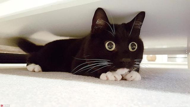 小黑猫靠铜铃大眼好奇表情包爆红网络图片