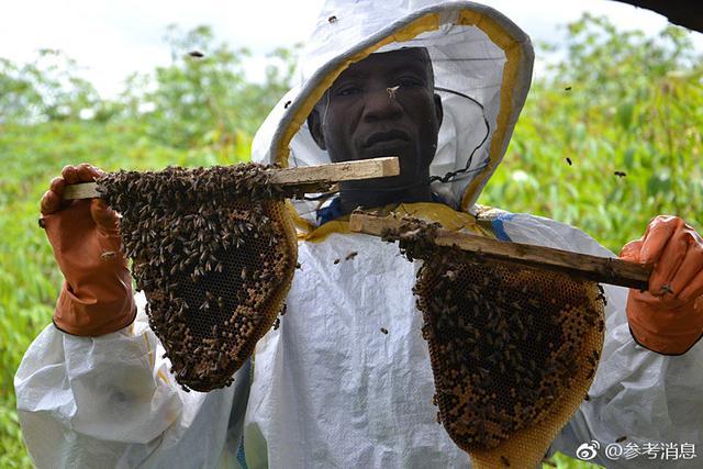 """利比里亚养蜂人:非洲""""v表情蜂""""不好惹微信表情大蛋里有个意思是什么蜜蜂图片"""