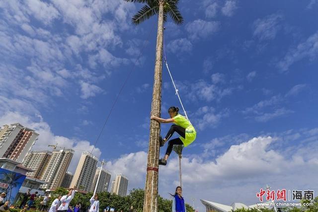 海南陵水举行攀爬椰子树比赛