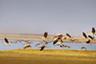 鄱阳小城冬季绝佳观鸟地