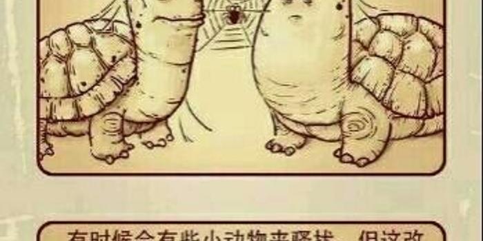 两只乌龟比赛耐力 结局太感人