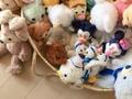 后宫佳丽三千就独宠兔兔一人