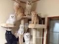 家里养了12只猫是种什么体验