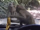 这是什么妖术……急死猴了!