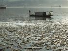 主汛期垃圾涌入三峡水库