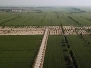 """中国农大师生扎根曲周县:23万亩盐碱滩变成""""米粮川"""""""