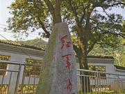 """""""红军树""""见证初心"""