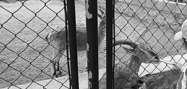 """动物园3天""""截留""""游客投喂饲料1.5吨"""
