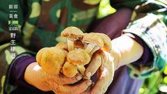 #新浪地标美食之旅##北纬49度#尽享逊克有机美食
