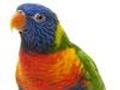 幽默小故事:会讲法语的鹦鹉