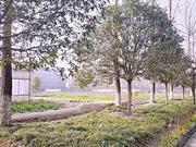 2020中國特色研究型大學排名 中國農業大學第一