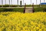 天津农学院何时更名天津农业大学?官方:已上报教育部