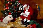 期待礼物 意大利儿童请求总理给圣诞老人发通行证