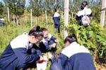 河北万余所中小学开设劳动教育课