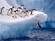 双语阅读:科学家发现南极海洋中的生态系统
